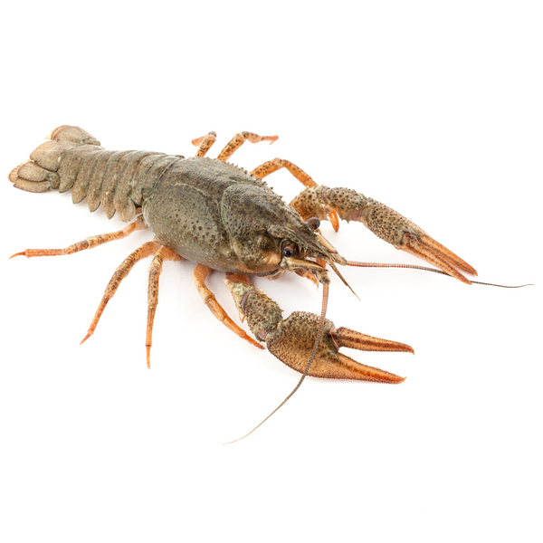 Crayfish 450 gr - London Grocery - Online Grocery Shopping