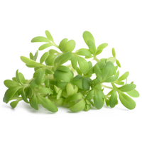 Cress 1 bunch - London Grocery - Online Grocery Shopping