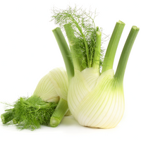 Fennel 1 bunch - London Grocery - Online Grocery Shopping