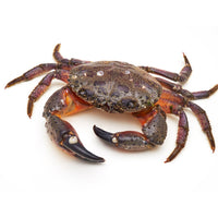 Live Crab x 1 - London Grocery - Online Grocery Shopping