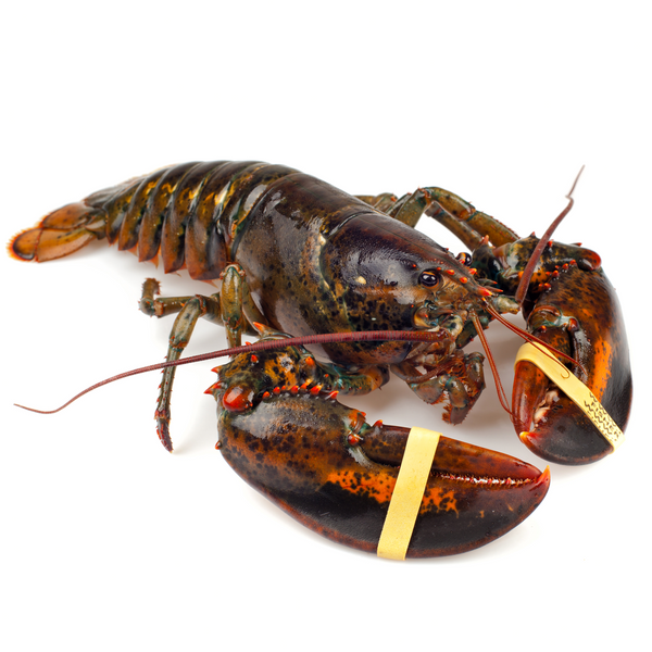 Fresh Live Lobster 1 piece / ~700 gr - London Grocery - Online Grocery Shopping