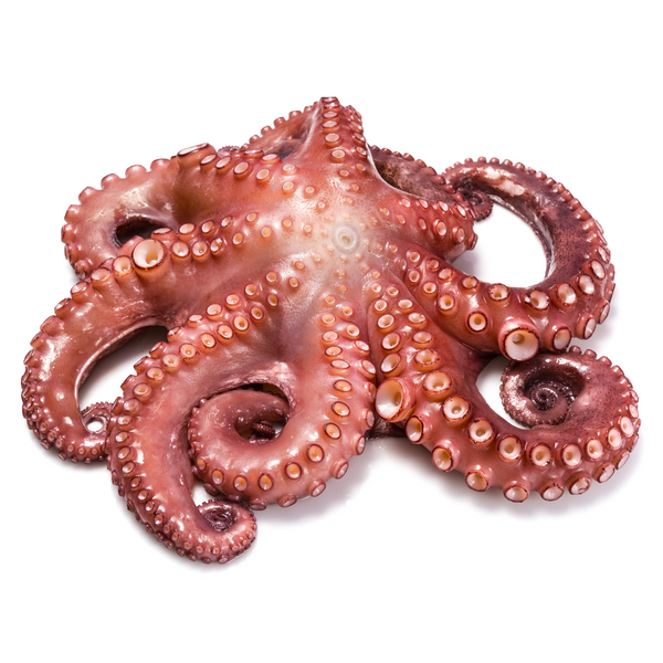 Fresh Octopus Whole 750 gr - London Grocery - Online Grocery Shopping