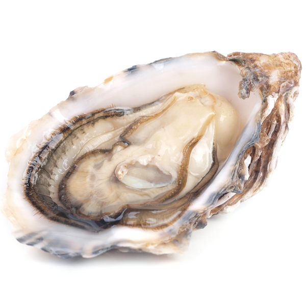Fresh Oysters x 2 - London Grocery - Online Grocery Shopping