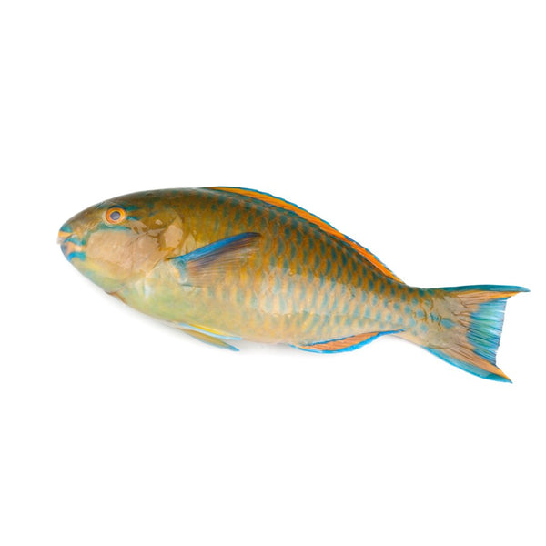 Parrot Fish 400gr - London Grocery