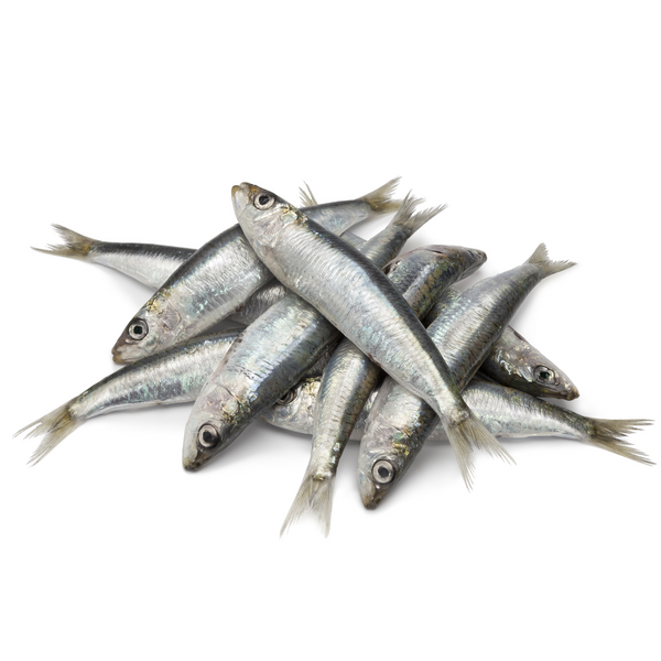Sardines - London Grocery - Online Grocery Shopping