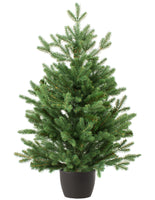 7/8 ft Real and Live Christmas Tree in a Pot , Nordman Fir ~ 200 - 250 cm - London Grocery - Online Grocery Shopping