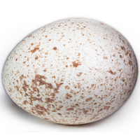 Turkey Egg 6 - London Grocery - Online Grocery Shopping