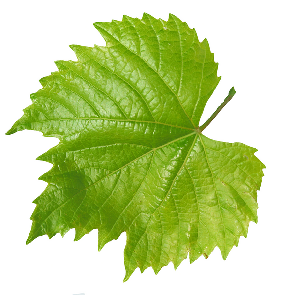 Vine Leaves - London Grocery - Online Grocery Shopping