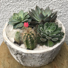 Succulent Planter - Limelight Floral Design