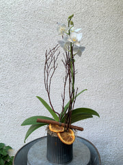 Citrus Spice Mini Orchid