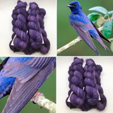 Purple Martin Feather