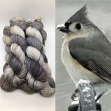 Winter's Tufted Titmouse