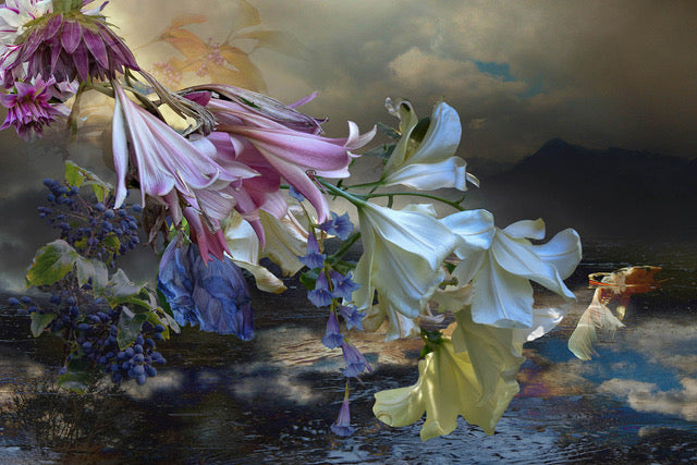 Joan Cahill, Water Lillies
