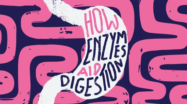 How Enzymes Aid Digestion