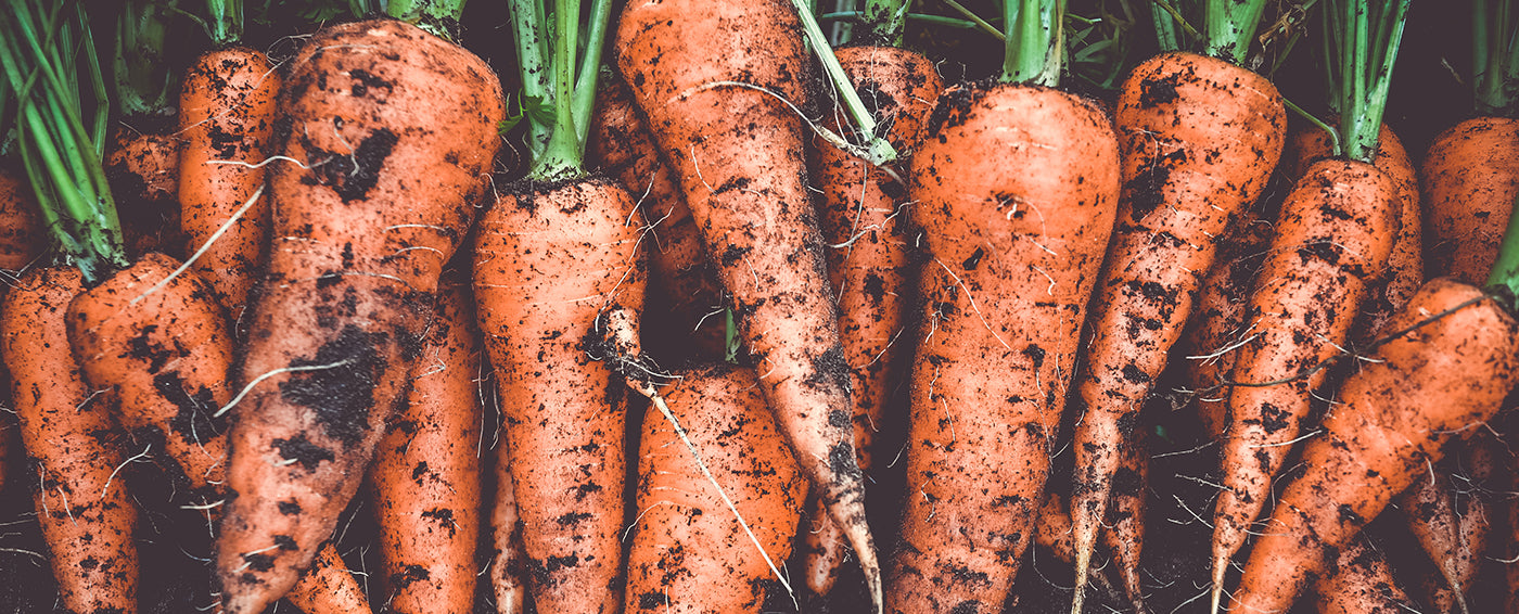 Root Vegetables: A Beginner's Guide article banner