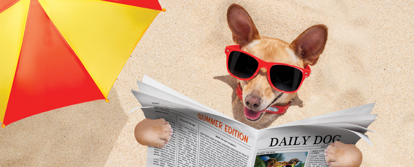 5 Great Places for a Doggy Vacay article banner