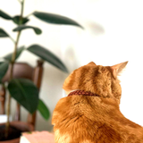Orange Cat wearing a rust cat collar made from Paracord in front of Plants (5181971759244)
