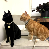 Two cats sitting on a chair together. Black Cat wearing Moss and Cream Paracord Collar with a golden tag and Tiger Cat wearing emerald green and grey Paracord Collar by Native Collars (5181971759244)