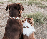 Two dogs sitting next to each other facing the opposite way of the viewer wearing Daintree Paracord Collar Native Collars 5 strands of Paracord in different colours - rust, moss, cream, grey, coyote (4748350095500)