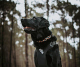 Black Labrador wearing Darling Paracord Collar Native Collars at the Pines in Perth Australia (4819731447948)