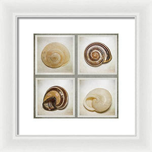 Summer Beach Shells - Framed Print