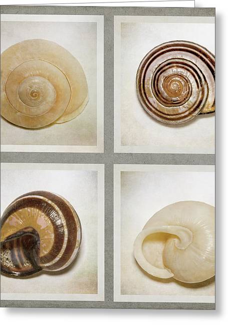 Summer Beach Shells - Greeting Card