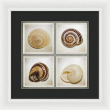 Load image into Gallery viewer, Summer Beach Shells - Framed Print