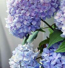 Load image into Gallery viewer, Happily Hydrangea- Paint by Number Kit