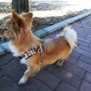 Check Diamond Teady Harness-Leash set