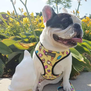 Fashion Icecream French Bulldog Harness