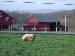 Pigasso, Lamb Ground Pasture Raised Copake NY, 1 lb
