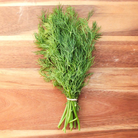 Ironwood, Dill Organic Mellenville NY, bunch