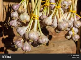 Garlic Bunched, Local Organic, ~3 heads
