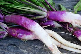 Common Hands, Turnip Japanese Purple Long Sustainable Philmont NY, lb