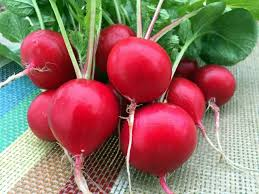 Rock Steady, Radish Red Sustainable Millerton NY, bunch