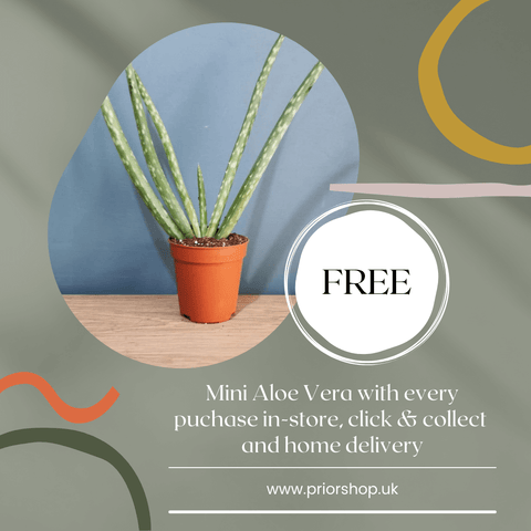Advert for a Free Aloe Vera plant with every in-store purchase