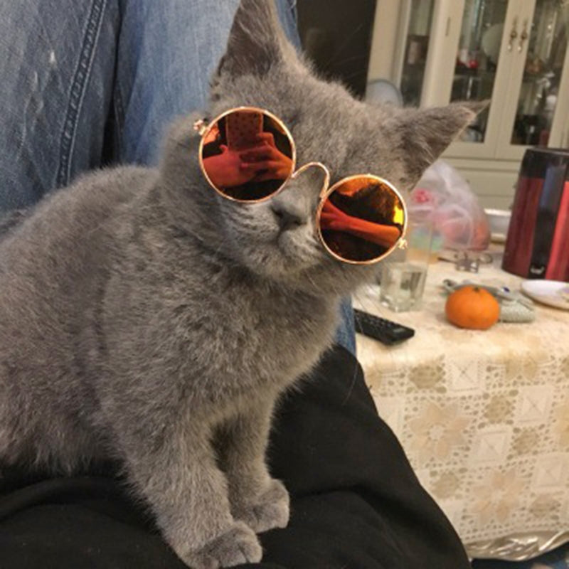 Cool Pet Sunglasses
