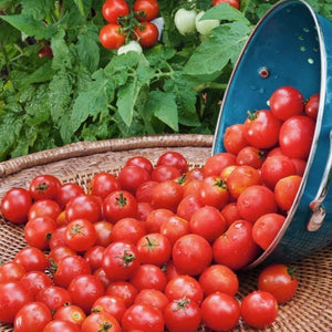 Tomato - Husky Cherry Red