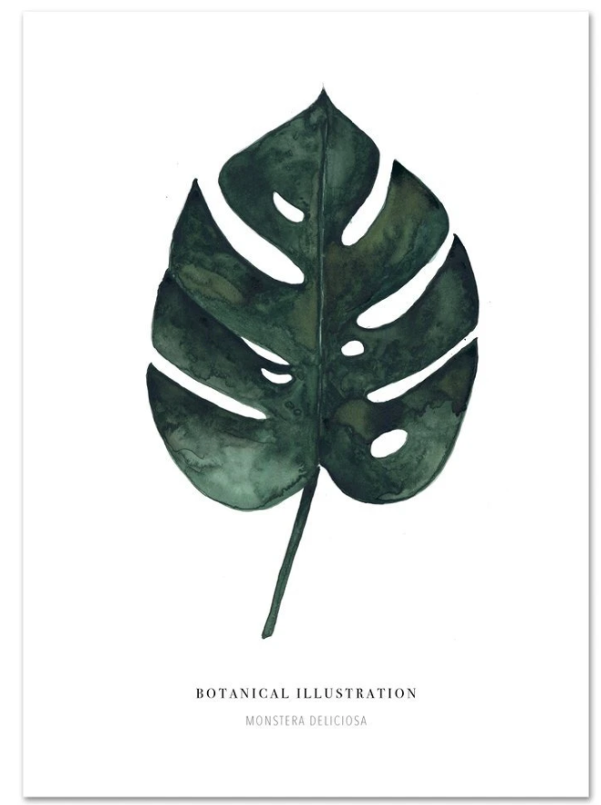 A4 Art Print Monstera Deliciosa