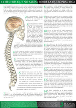 14 Facts of Chiropractic Care