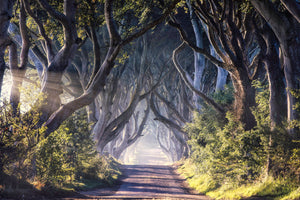 Dark Hedges - The King's Road