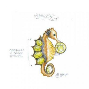 Seahorse Pin - Week 1 - Mark Schneider Design
