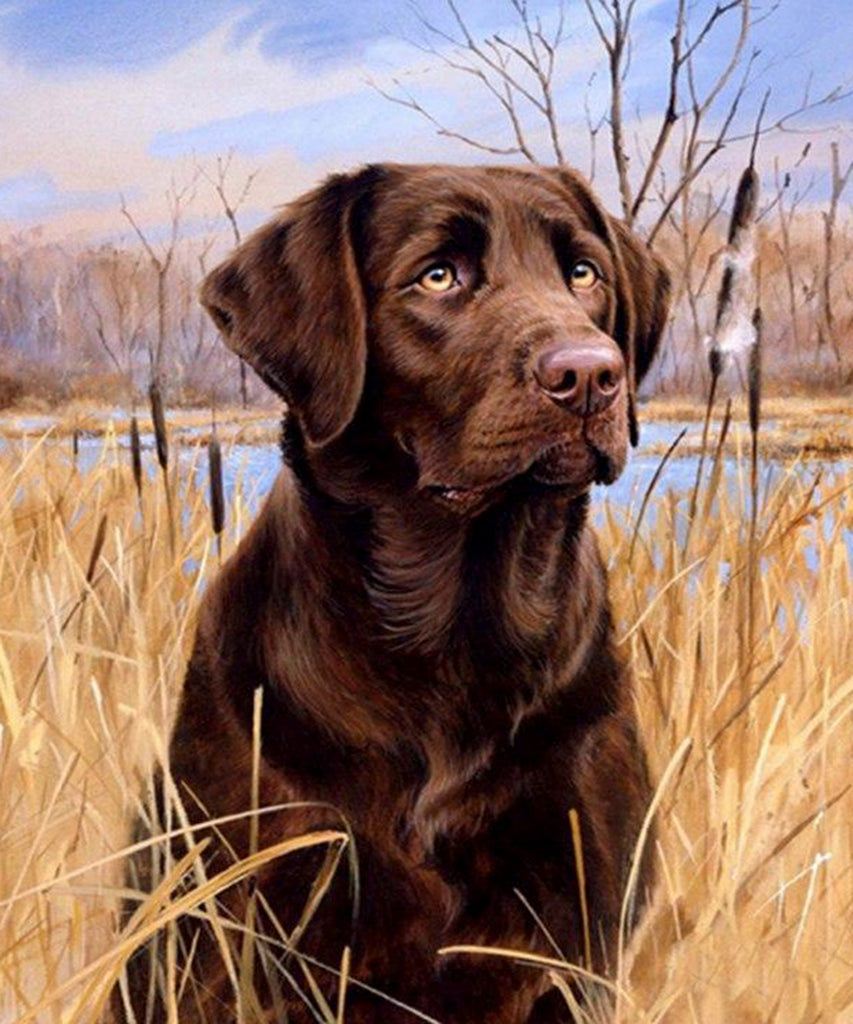 Diamond painting labrador hond