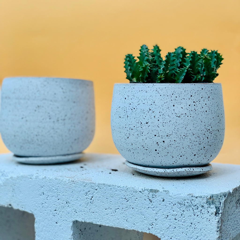 Speckle boi planter w/ plate