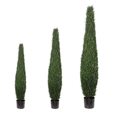 Tree Tall Cypress Topiary Ruths House Event Rentals