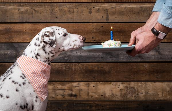 5 Essentials for a Rockin' Dog Party
