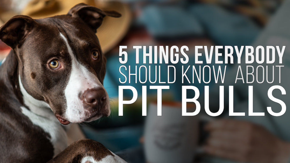 5 Things Everybody Should Know About Pit Bulls