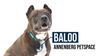 Adoption Feature: Baloo