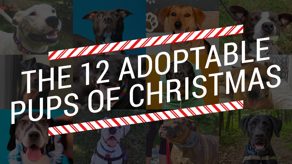 12 Adoptable Pups of Christmas