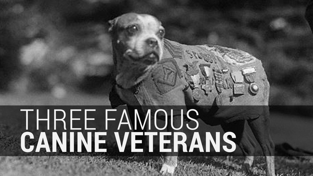 Three Famous Canine Veterans